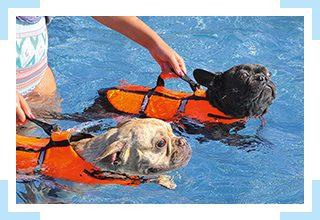 September 2018 – 3. Hundeschwimmen im Tiergartenbad