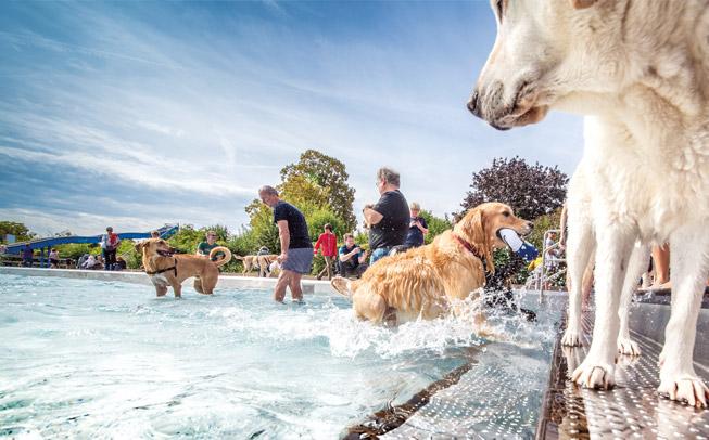 Hundeschwimmen im Tiergartenbad